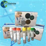 鲍疱疹样病毒荧光定量PCR试剂盒-染料法
