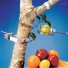 果實-樹木莖干生長測量儀