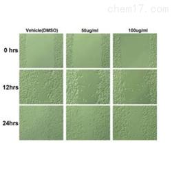 JRD956细胞划痕技术服务