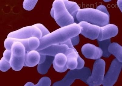 粪产碱杆菌规格