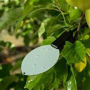 叶片湿度传感器