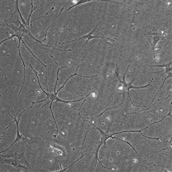 细胞模型实验