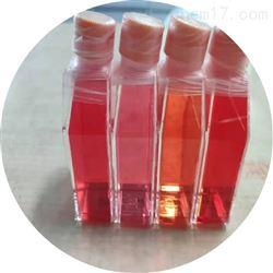 RAB-iCell-d020兔肝kupffer细胞  免疫荧光鉴定