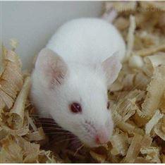 胰腺炎模型大小鼠实验