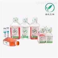 SP2/0(小鼠骨髓瘤细胞)