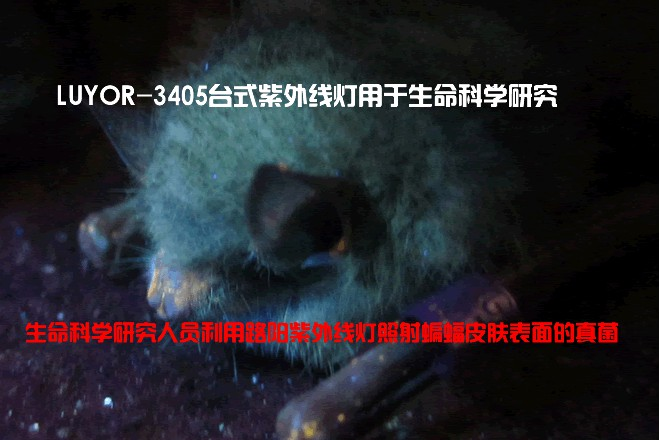 LUYOR-3405台式紫外线灯/紫外线发生器