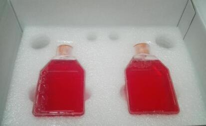 人脐静脉细胞HUVEC