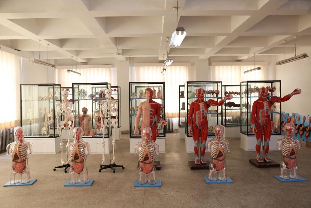 知能医学模型产品展厅