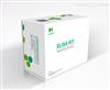 人白介素10试剂盒